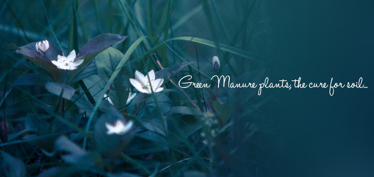 The-green-manure-plant