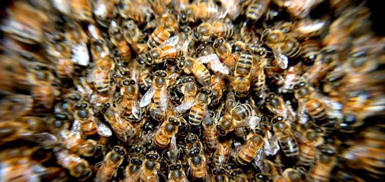 The-Character-And-The-Unbelievable-Ability-Of-Bees-In-Agriculture